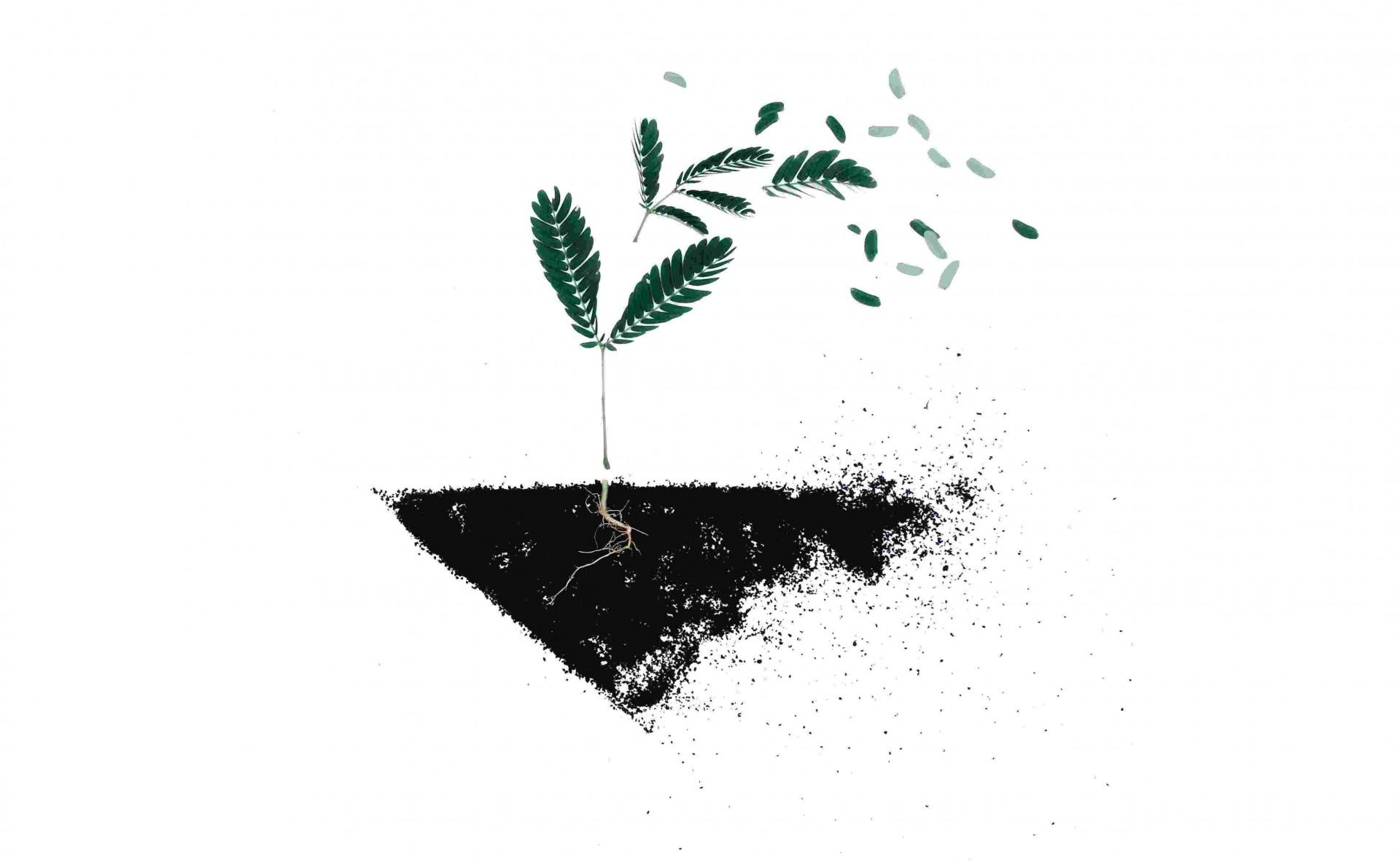 Frykter internasjonalt klima- og miljøarbeid nedprioriteres som følge av koronakrisen