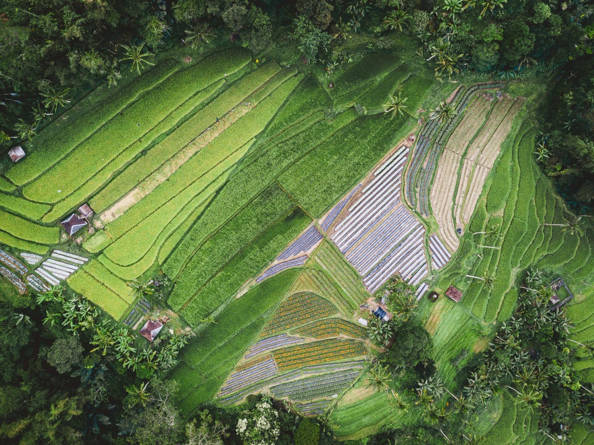 Ny rapport: Bærekraftige matsystemer i klimaendringenes tid