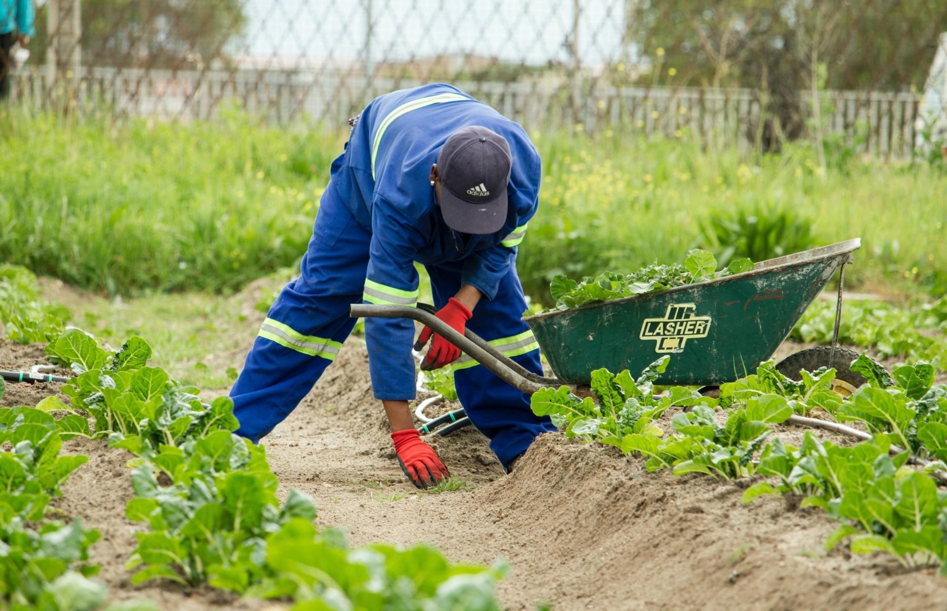 Hvordan går vi fra krise til strukturendringer i mat- og landbrukspolitikken?