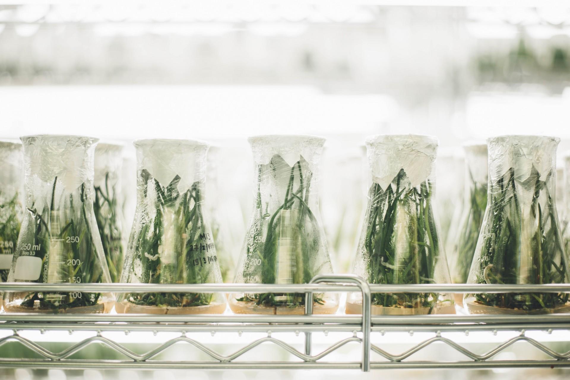 Møte om syntetisk biologi og nye GMOer