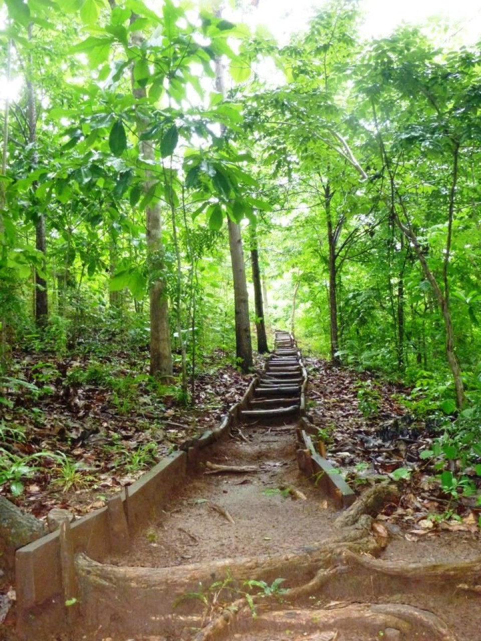 Ti år med regnskogmilliarder