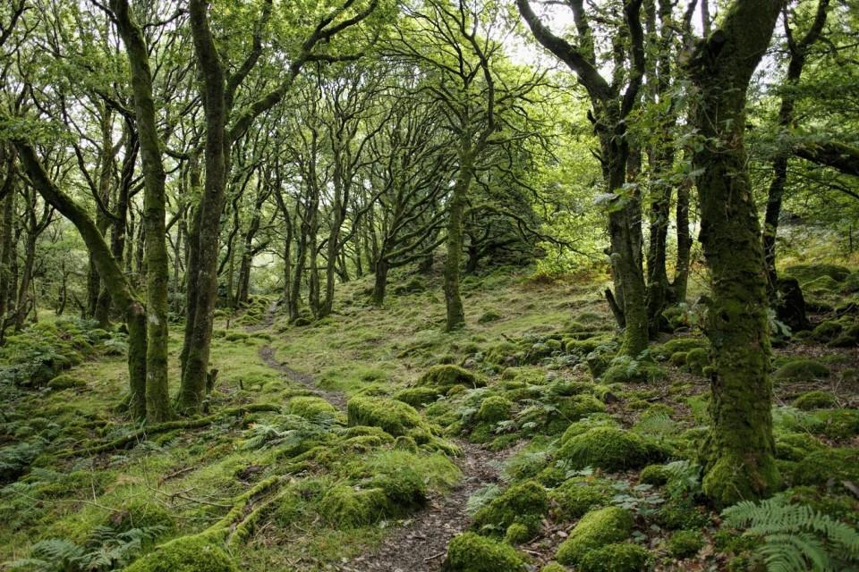 To av tre velgere ønsker sterkere tiltak for å stanse naturkrisa