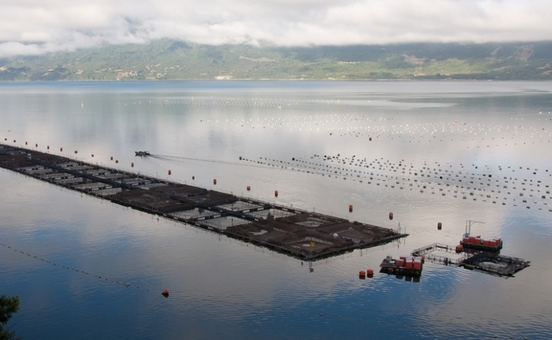 Mainstream / Cermaq's progress in contributing to sustainable salmon aquaculture in Chile